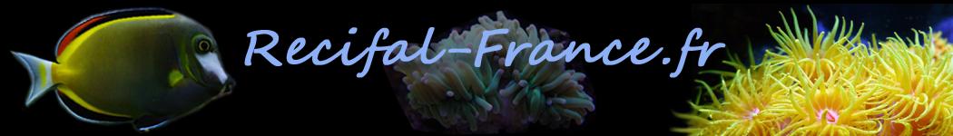 www.recifal-france.fr, la passion de l'aquariophilie